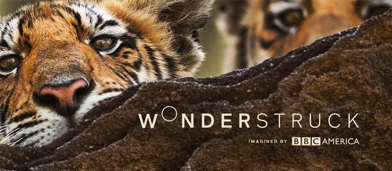 Wonder Struck, Tiger included as part of the Variety Pak